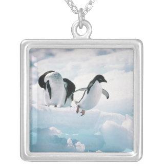 Adelie penguins (pygoscelis adeliae) Antarctica Silver Plated Necklace