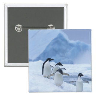 Adelie Penguins (Pygoscelis adeliae) on ice, 2 Inch Square Button