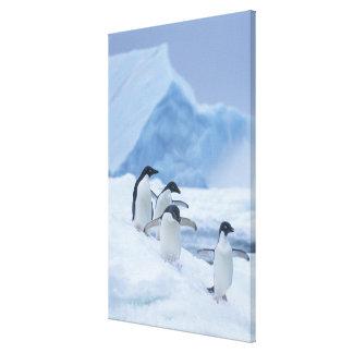 Adelie Penguins (Pygoscelis adeliae) on ice, Canvas Print