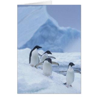 Adelie Penguins (Pygoscelis adeliae) on ice, Card