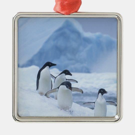 Adelie Penguins (Pygoscelis adeliae) on ice, Metal Ornament