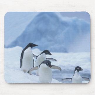 Adelie Penguins (Pygoscelis adeliae) on ice, Mouse Pad