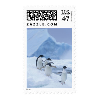 Adelie Penguins (Pygoscelis adeliae) on ice, Postage Stamp