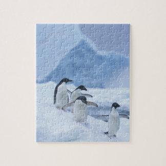 Adelie Penguins (Pygoscelis adeliae) on ice, Puzzle