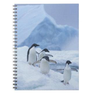 Adelie Penguins (Pygoscelis adeliae) on ice, Spiral Notebook