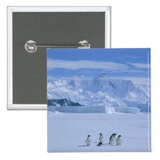 Adelie Penguins, Pygoscelis adeliae), Pinback Button