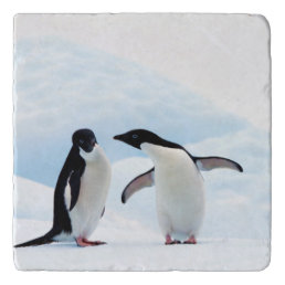 Adelie Penguins Trivet