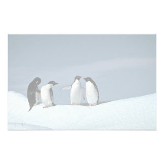 Adelite penguins, Antarctica Stationery