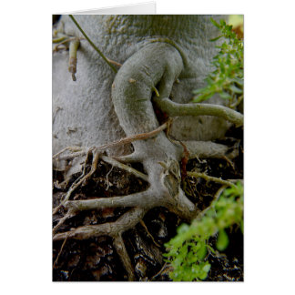 Adenium Gnarled roots of Desert Rose Card