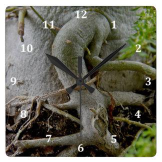 Adenium Gnarled roots of Desert Rose Square Wall Clock