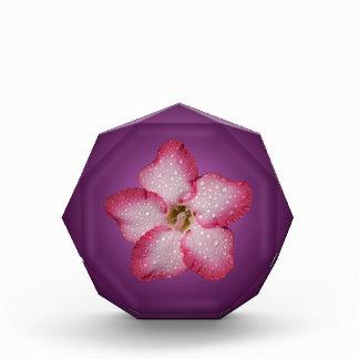 Adenium Pink Flower Flora Gradient Violet Acrylic Award