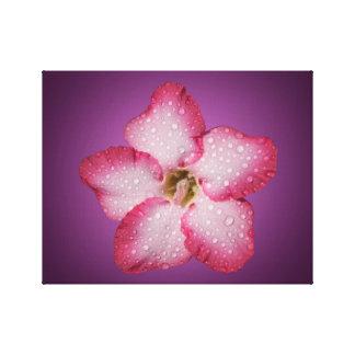 Adenium Pink Flower Flora Gradient Violet Canvas Print