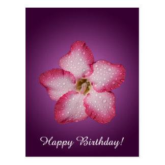 Adenium Pink Flower Flora Gradient Violet Postcard