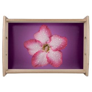 Adenium Pink Flower Flora Gradient Violet Serving Tray