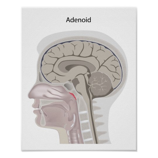Adenoid location in the head Poster