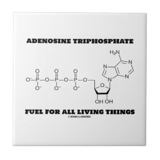 Adenosine Triphosphate Fuel For All Living Things Ceramic Tiles
