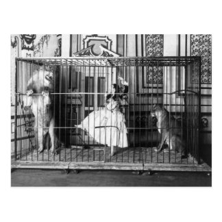 Adgie and Her Trained Lions Vintage Circus 1897 Postcard