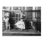 Adgie y ella entrenaron a los leones 1897 tarjetas postales