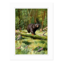 Adirondack Black Bear Postcard