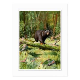 Adirondack Black Bear Postcard