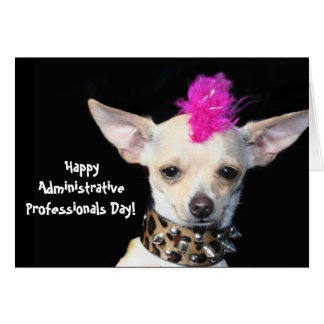 Administrative Professionals Day chihuahua card