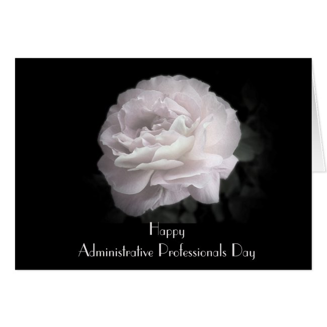 Administrative Professionals Day Pale Pink Rose