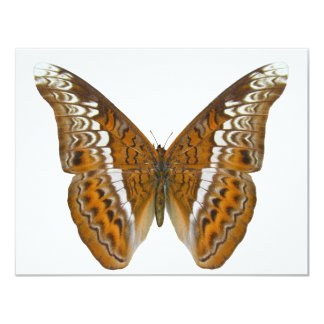 """Admiral Butterfly 4.25"""" X 5.5"""" Invitation Card"""