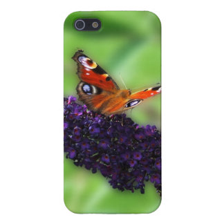 Admiral in the Butterfly Bush Covers For iPhone 5