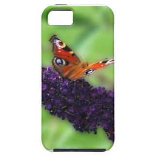 Admiral in the Butterfly Bush iPhone 5 Case
