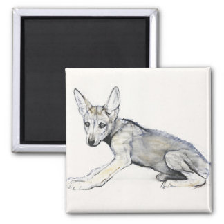 Adolescent Arabian Wolf Pup 2009 2 Inch Square Magnet