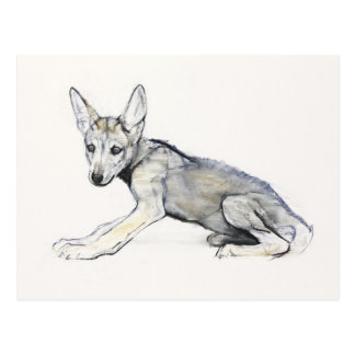 Adolescent Arabian Wolf Pup 2009 Postcard