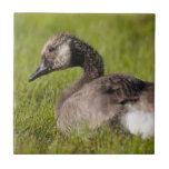 Adolescent Goose Tile