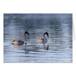 Adolescent Swans Greeting Card