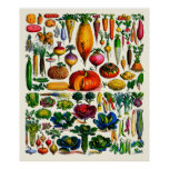 Adolphe Millot ~ Vegetables Poster