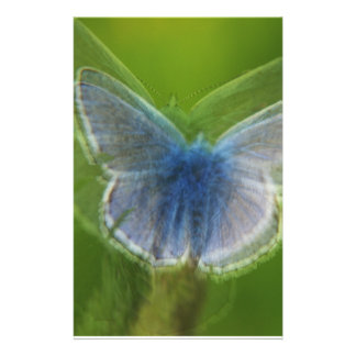 Adonis Blue Butterfly Blurred Stationery Paper