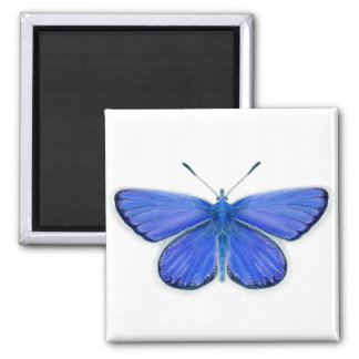 Adonis Blue Butterfly Watercolour Painting Artwork Magnet