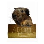 Adopción del rescate del conejillo de Indias Tarjetas Postales