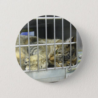 Adopt A Cat Button 001