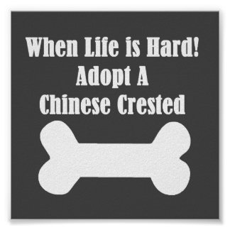 Adopt A Chinese Crested Poster