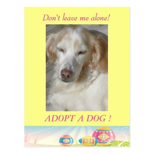 Adopt a Dog  Easter Postcard