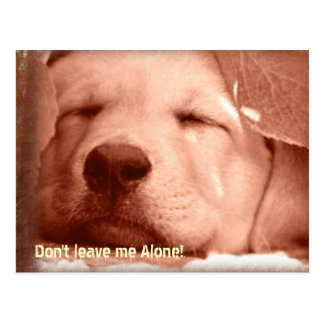 Adopt a Dog Postcard