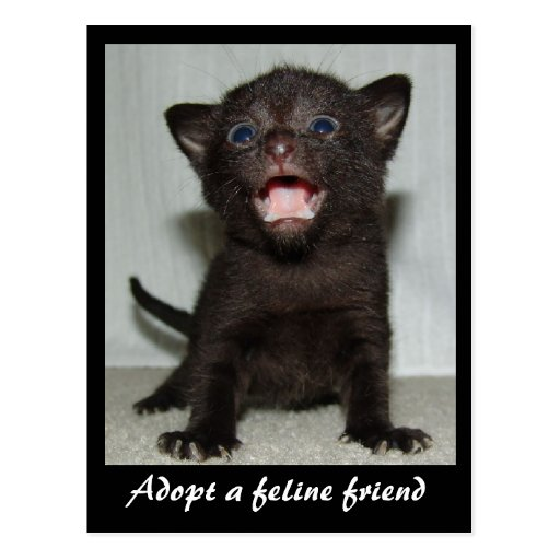 Adopt a Feline Friend Postcard