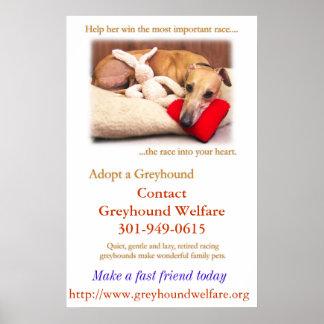 Adopt a Greyhound Poster