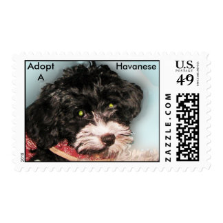 Adopt a Havanese stamp