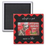 adopt a pet, save a life fridge magnets