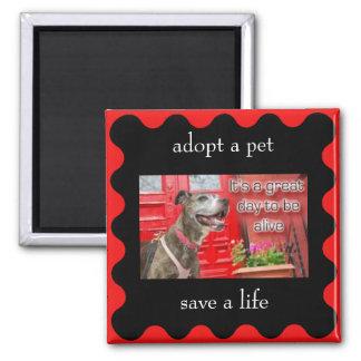 adopt a pet, save a life magnet