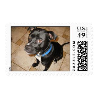 adopt a pet stamps