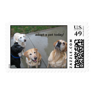 adopt a pet today! postage stamp