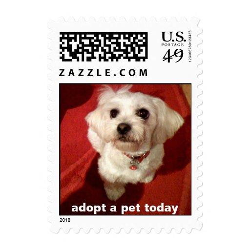 adopt a pet today stamp
