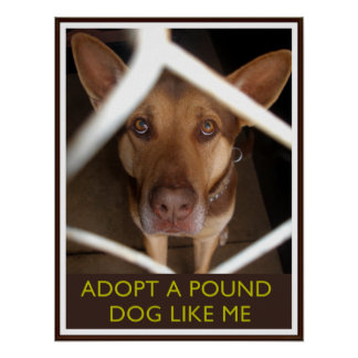 Adopt A Pound Dog Like Me Poster with Sad Dog Print